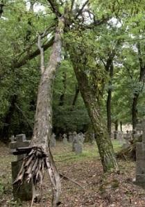 I. világháborús katonai temető, Huszt