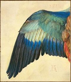 Dürer: Szalakóta szárnya