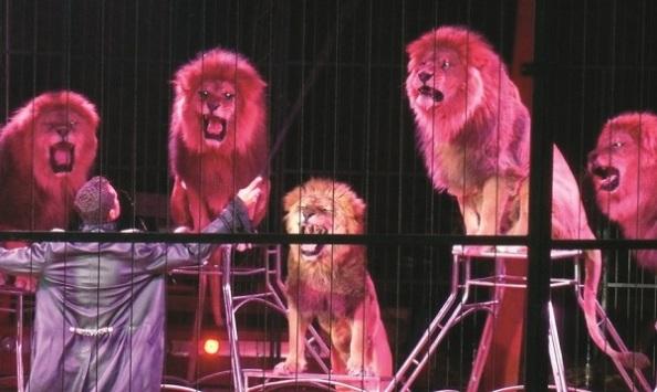 Montico és az oroszlánok